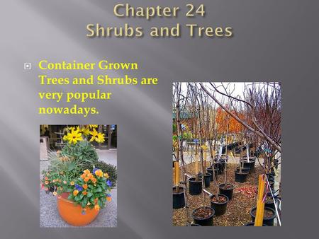  Container Grown Trees and Shrubs are very popular nowadays.
