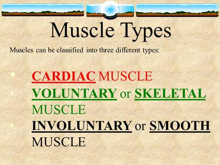 Muscle Types Muscles can be classified into three different types: CARDIAC MUSCLE VOLUNTARY or SKELETAL MUSCLE INVOLUNTARY or SMOOTH MUSCLE.