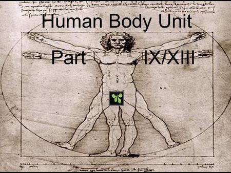 Human Body Unit Part IX/XIII. Human Body Unit Part IX/XIII.