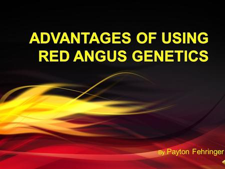 By Payton Fehringer. Why Red Angus Genetics?  Superior maternal traits  Crossbreeding advantages  Promotional tools  Red Angus Association.