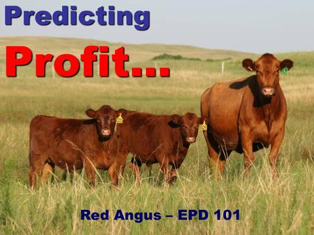 EPD 101 PredictingProfit… Red Angus – EPD 101. EPD 101 Members (Seedstock producers) succeed through enabling the success (profit) of their commercial.