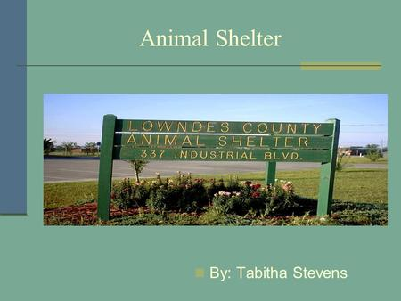 Animal Shelter By: Tabitha Stevens. Cleaning Cat Cages Clean out newspapers Place new newspapers in cage Place fresh food, water, and litter.