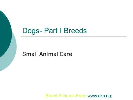 Dogs- Part I Breeds Small Animal Care Breed Pictures From www.akc.org.
