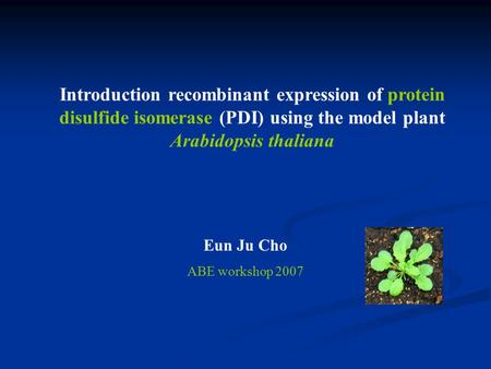 Introduction recombinant expression of protein disulfide isomerase (PDI) using the model plant Arabidopsis thaliana Eun Ju Cho ABE workshop 2007.