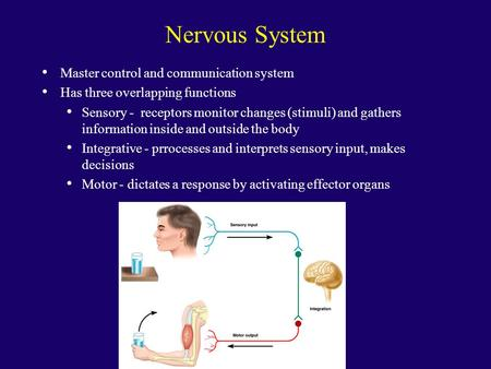 Nervous System Master control and communication system Has three overlapping functions Sensory - receptors monitor changes (stimuli) and gathers information.