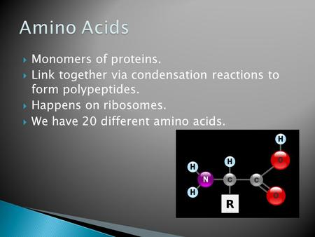  Monomers of proteins.  Link together via condensation reactions to form polypeptides.  Happens on ribosomes.  We have 20 different amino acids.