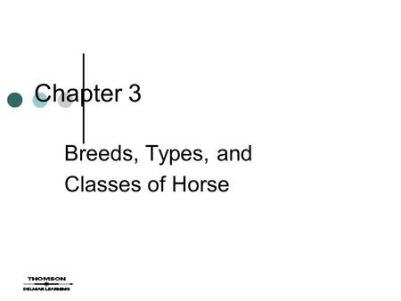 Chapter 3 Breeds, Types, and Classes of Horse. Breeds Through selective breeding different breeds were born Today over 300 breeds exist Recognized breeds.