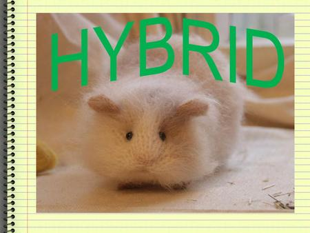 What is Hybrid? These are animals of any offspring resulting from the mating of two distinctly homozygous or purebred individuals. Also has one dominant.