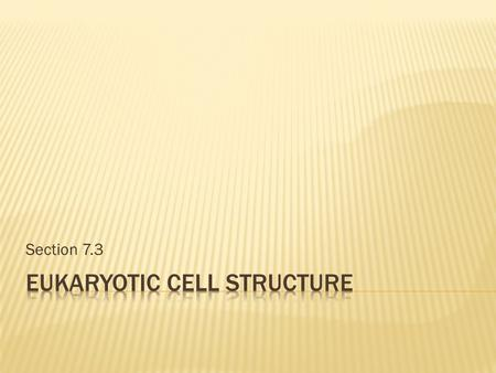 Section 7.3.  Identify the structures and function of the parts of a typical eukaryotic cell.  Explain the advantages of highly folded membranes in.