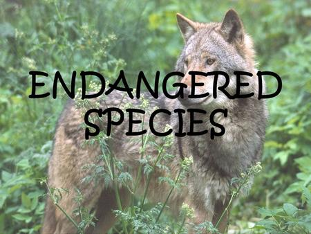 ENDANGERED SPECIES. ENDANGERED SPECIES ENDANGERED SPECIES is a population of an organism which is at risk of becoming extinct because it is threatened.