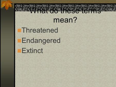 What do these terms mean? Threatened Endangered Extinct.