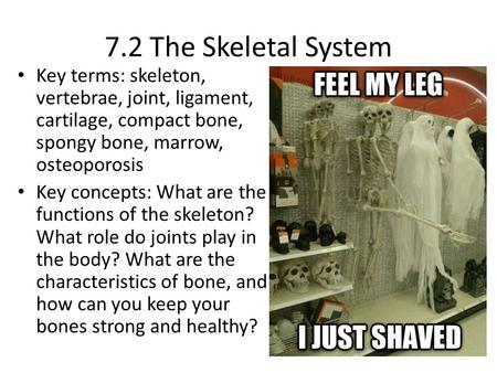 7.2 The Skeletal System Key terms: skeleton, vertebrae, joint, ligament, cartilage, compact bone, spongy bone, marrow, osteoporosis Key concepts: What.