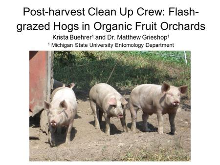 Post-harvest Clean Up Crew: Flash- grazed Hogs in Organic Fruit Orchards Krista Buehrer 1 and Dr. Matthew Grieshop 1 1 Michigan State University Entomology.