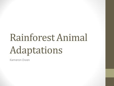 Rainforest Animal Adaptations Kameron Owen. Rainforest Layers The layers of the rainforest can help animals adapt to their surroundings.