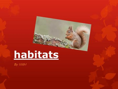 Habitats By lilith!. Contents Animals that I am going to look at How the creatures have adapted to their habitats Animal facts Animal fun.