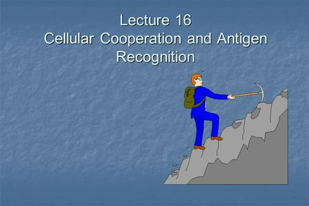 Lecture 16 Cellular Cooperation and Antigen Recognition.