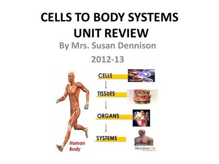CELLS TO BODY SYSTEMS UNIT REVIEW By Mrs. Susan Dennison 2012-13.