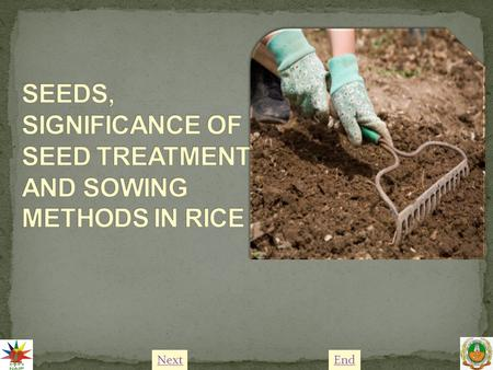 NextEnd. Rice is the most important food crop of the world. Seed treatment of rice is practiced to control pest and diseases and to fix atmospheric nitrogen.