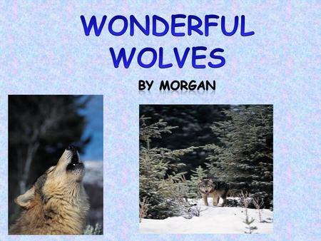 Do you know about wolves? Well you are about to learn about them. Read my report, and it will tell you about them. In this report I will tell you about.