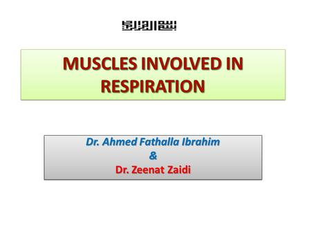 MUSCLES INVOLVED IN RESPIRATION