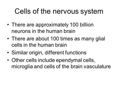 chapter 2 neurons and glia Glial cells and, in particular, astrocytes have been assigned the main role of supporting neurons for their function in the brain, including buffering the extracellular potassium and providing energetic support advances in glial research have demonstrated a more active behavior of astrocytes, which are able to perform functions traditionally .