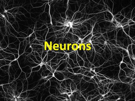 Neurons Neurons are highly specialized cells. A neuron has four parts. 1. cell body has nucleus and organelles 1 Cell body 2. dendrites receive impulses.