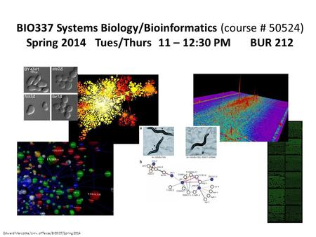BIO337 Systems Biology/Bioinformatics (course # 50524) Spring 2014 Tues/Thurs 11 – 12:30 PM BUR 212 Edward Marcotte/Univ. of Texas/BIO337/Spring 2014.