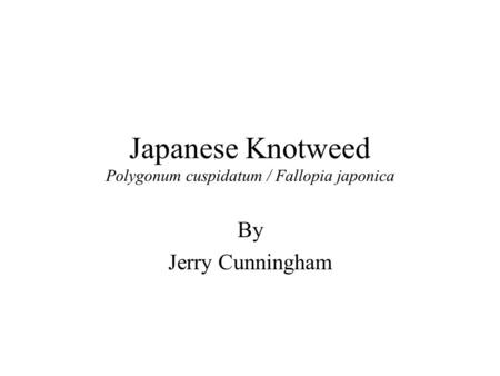 Japanese Knotweed Polygonum cuspidatum / Fallopia japonica By Jerry Cunningham.