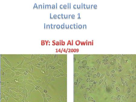 Animal cell culture Lecture 1 Introduction