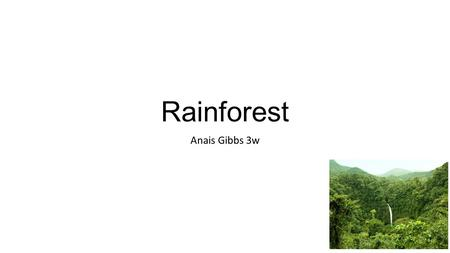 Rainforest Anais Gibbs 3w. The biggest Rainforest in the World The biggest Rainforest in the world is the Amazon. It is in South America. It has 2 and.
