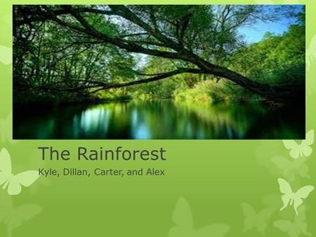 The Rainforest Kyle, Dillan, Carter, and Alex. Rainforest Locations  Most rainforests are located in South America  Very little rainforest is in Australia.
