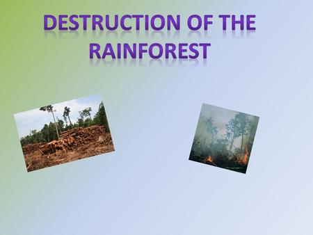 Rainforest destruction is the mass cutting down of trees in rainforests. Doing this can kill animals and destroy landscapes. Rainforest destruction started.