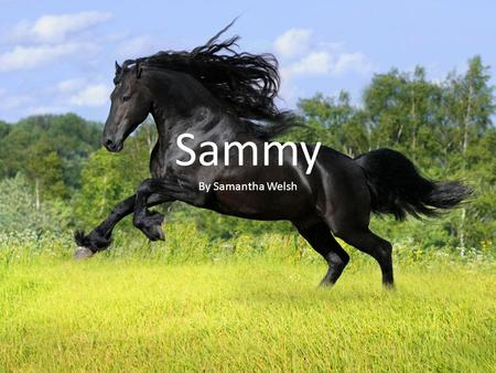 Sammy By Samantha Welsh. There was once a sweet horse named Sammy. She had a family that loved her so much. They were part of a Renaissance Fair,