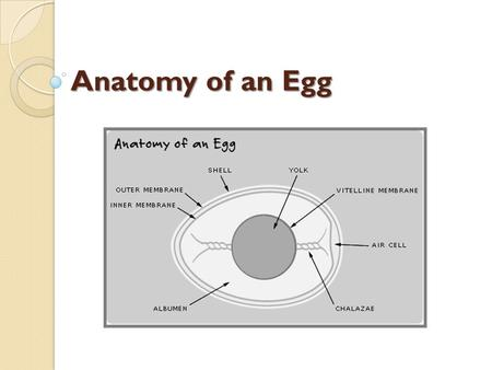 Anatomy of an Egg. Shell Bumpy and grainy in texture. An eggshell is covered with as many as 17,000 tiny pores. It is a semi-permeable membrane, which.