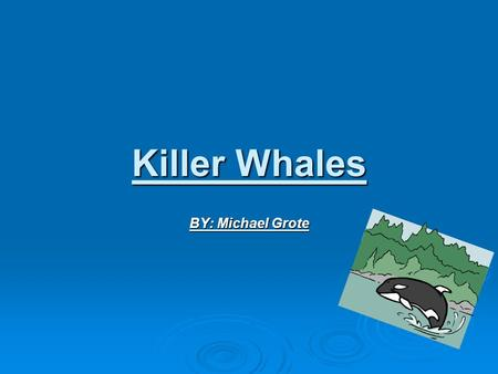 Killer Whales BY: Michael Grote. Introduction Huge predators of the ocean, that's what killer whales are. All sea animals fear killer whales. They have.