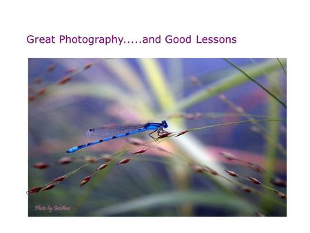 Great Photography.....and Good Lessons Catch the moment - Perfect photography!