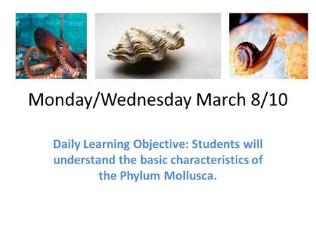Monday/Wednesday March 8/10 Daily Learning Objective: Students will understand the basic characteristics of the Phylum Mollusca.