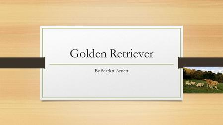 Golden Retriever By Scarlett Arnett. How does your animal look? They have golden fur. They have pink tongues. They have blackish brown noses. They have.