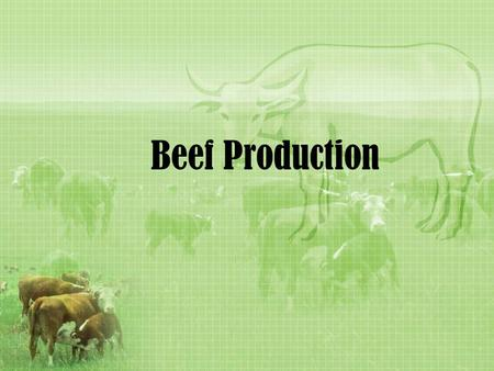 Beef Production. Terms to Know Polled –born naturally without horns Horned –Born naturally with the ability to grow horns….may never grow though Marbling.