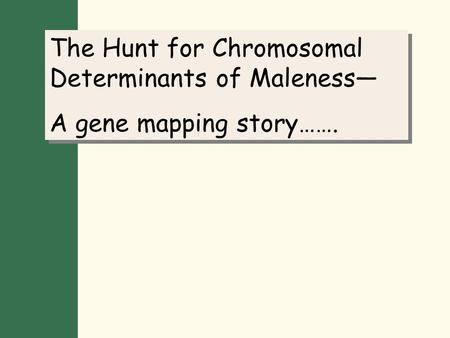 The Hunt for Chromosomal Determinants of Maleness— A gene mapping story……. The Hunt for Chromosomal Determinants of Maleness— A gene mapping story…….