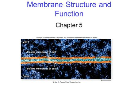 Membrane Structure and Function Chapter 5. 2 Membrane Structure The fluid mosaic model of membrane structure contends that membranes consist of: -phospholipids.