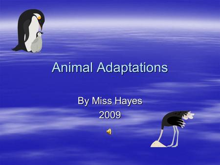 Animal Adaptations By Miss Hayes 2009 Adaptations, Habitats, Biomes Essential Questions  Read through the following presentation with your group and.