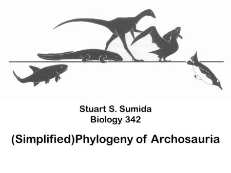 Stuart S. Sumida Biology 342 (Simplified)Phylogeny of Archosauria.