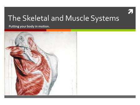  The Skeletal and Muscle Systems Putting your body in motion.