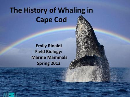 The History of Whaling in Cape Cod Emily Rinaldi Field Biology: Marine Mammals Spring 2013.