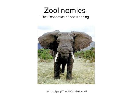 Zoolinomics The Economics of Zoo Keeping Sorry, big guy! You didn't make the cut!!