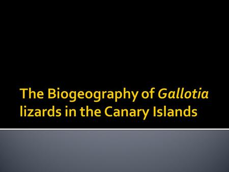The Biogeography of Gallotia lizards in the Canary Islands
