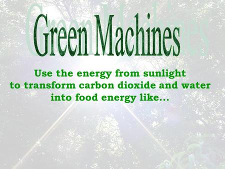 Use the energy from sunlight to transform carbon dioxide and water into food energy like...