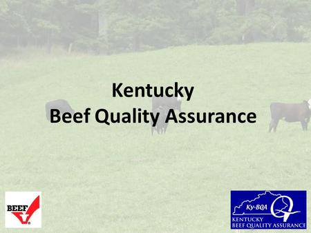 Kentucky Beef Quality Assurance. Why practice Beef Quality Assurance principles? To ensure that your cattle are managed in a manner that will result.
