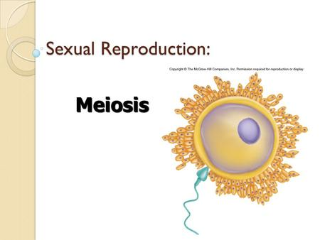 Sexual Reproduction: Meiosis. What is Sexual Reproduction? Combines genetic material from two parents to produce a new individual Creates an increase.